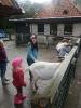 Kinderboerderij_1
